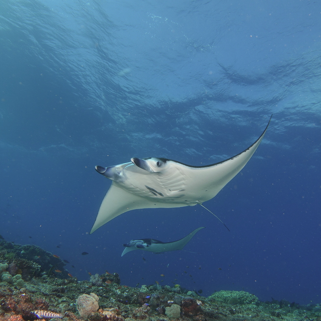 Tour_Diving Package