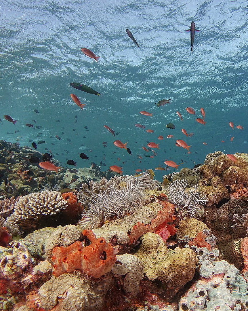 More Experiences_Snorkeling